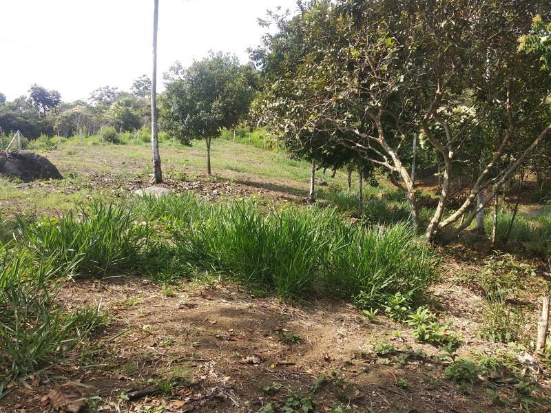 Imagen http://pictures.domus.la/inmobiliaria_301/84651_5_70607184.jpg